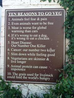 waarom vegetarier worden