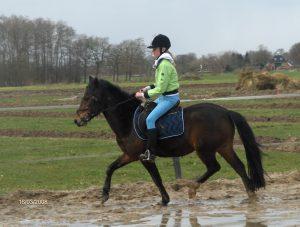 waarom paardrijden een sport is